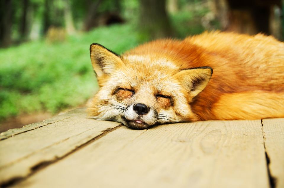 animal durmiendo 1 ¿Qué tal duermes?