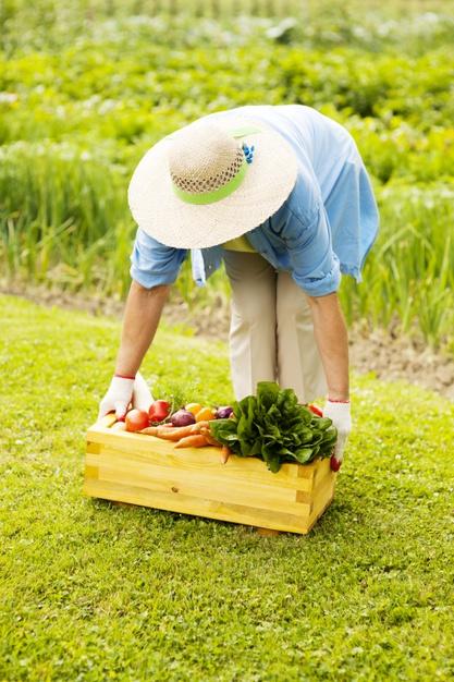 mujer mayor recogiendo caja llena verduras 6 consejos para prevenir y mejorar los dolores de espalda