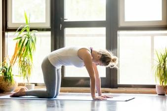 yoga casa actitud gato 6 consejos para prevenir y mejorar los dolores de espalda